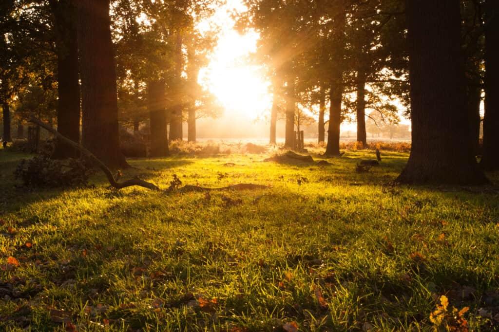 Sunrise seen through a treed countryside.
