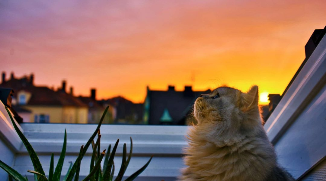 Orange tabby cat sitting next to an aloe plant looking peacefully up at the sky.